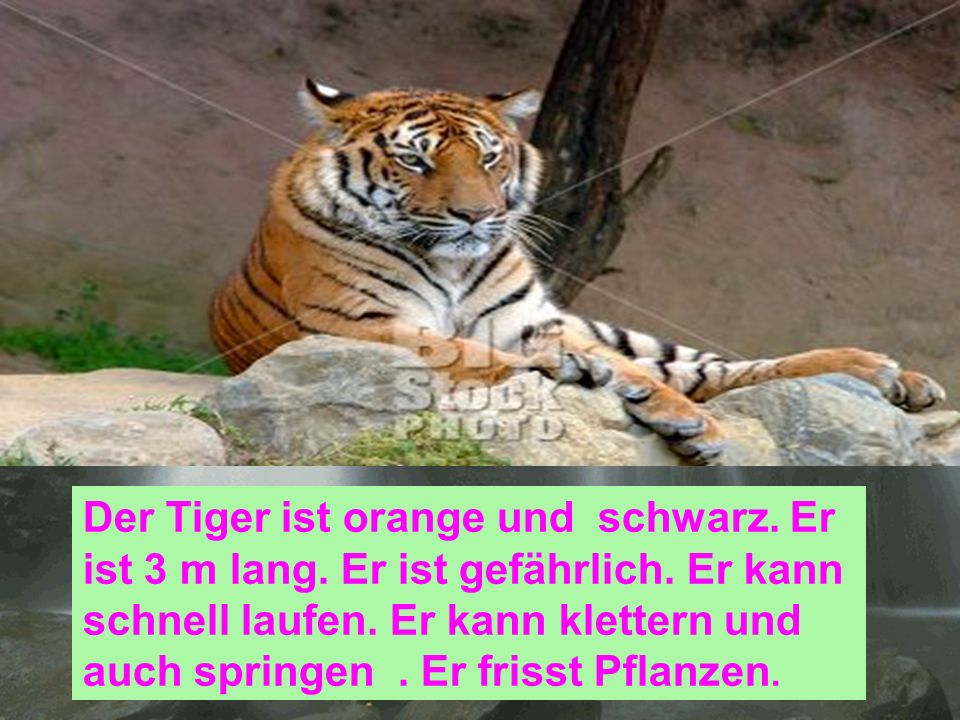 Der Tiger ist orange und schwarz. Er ist 3 m lang. Er ist gefährlich