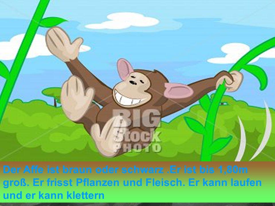 Der Affe ist braun oder schwarz. Er ist bis 1,80m groß