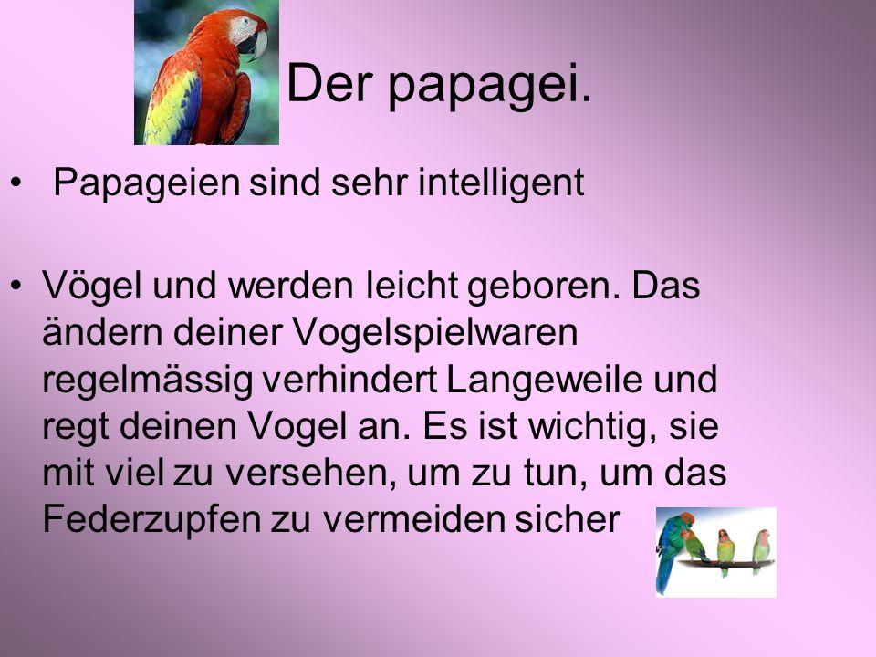 Der papagei. Papageien sind sehr intelligent