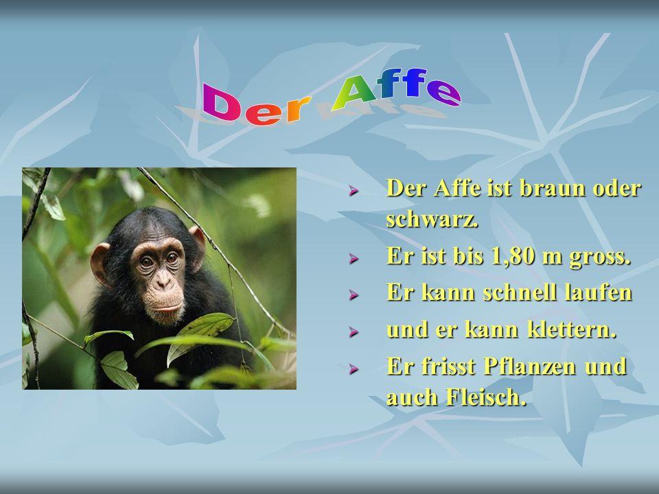 Der Affe Der Affe ist braun oder schwarz. Er ist bis 1,80 m gross.