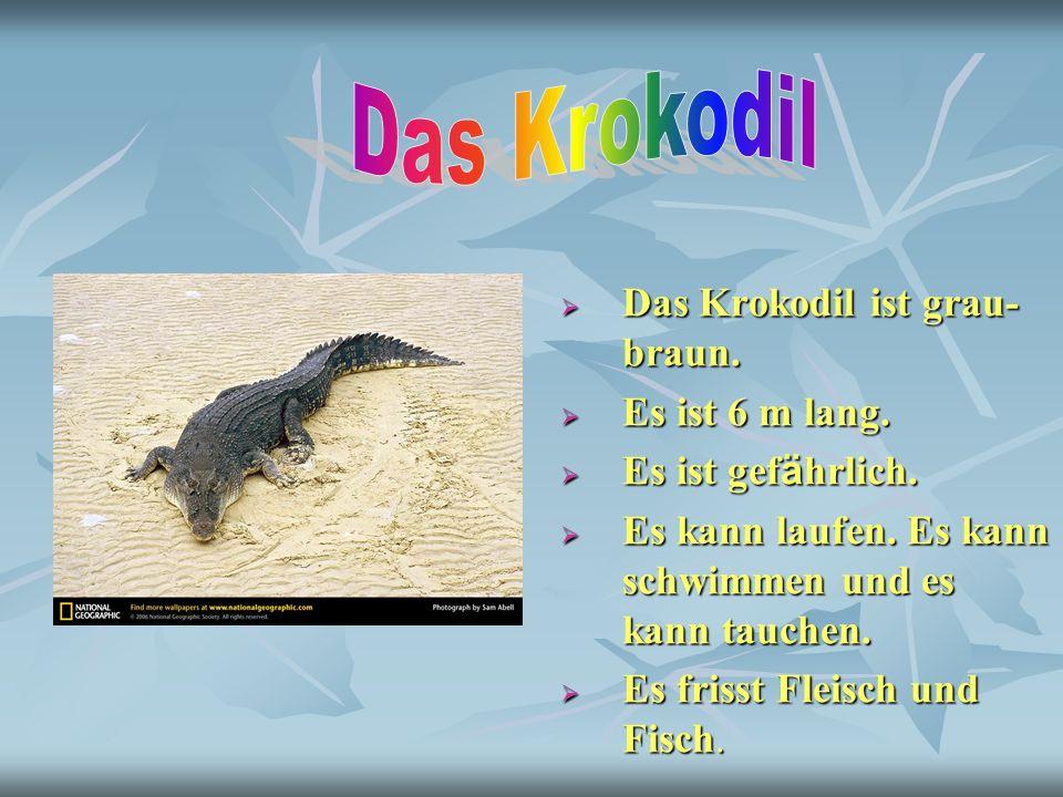 Das Krokodil Das Krokodil ist grau-braun. Es ist 6 m lang.