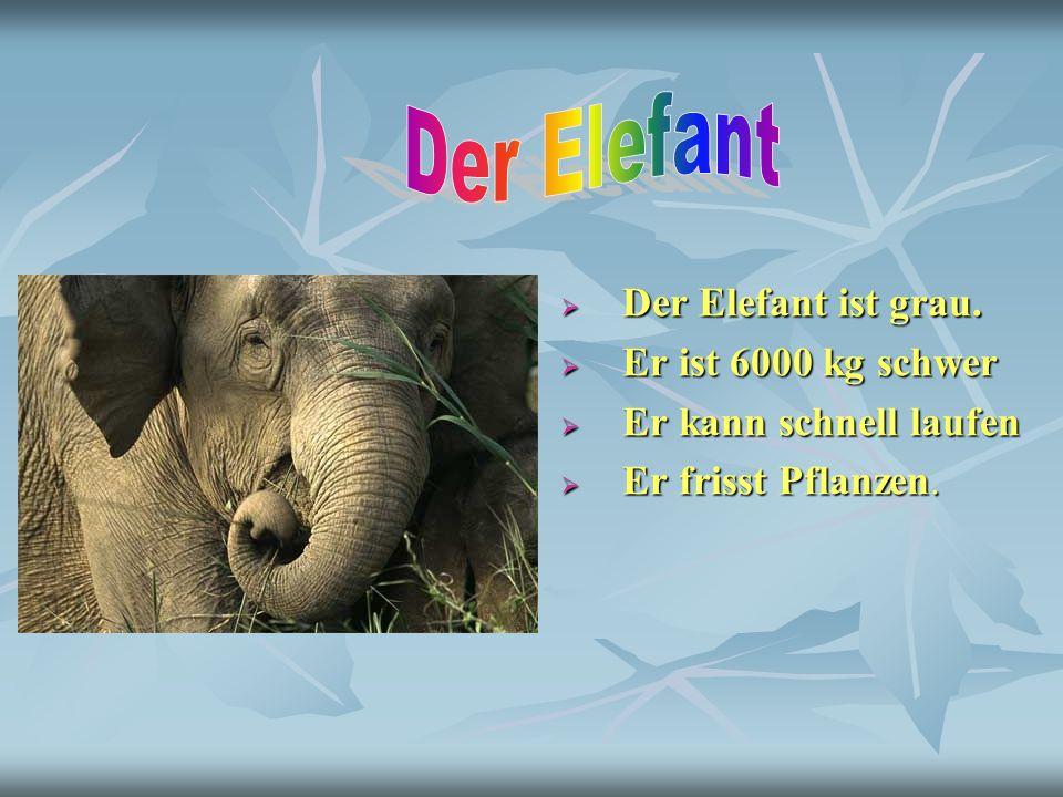 Der Elefant Der Elefant ist grau. Er ist 6000 kg schwer