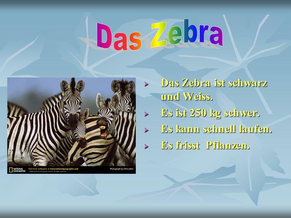 Das Zebra Das Zebra ist schwarz und Weiss. Es ist 250 kg schwer.