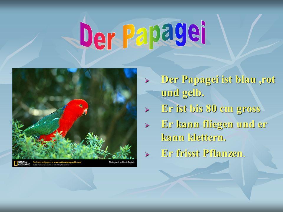 Der Papagei Der Papagei ist blau ,rot und gelb. Er ist bis 80 cm gross