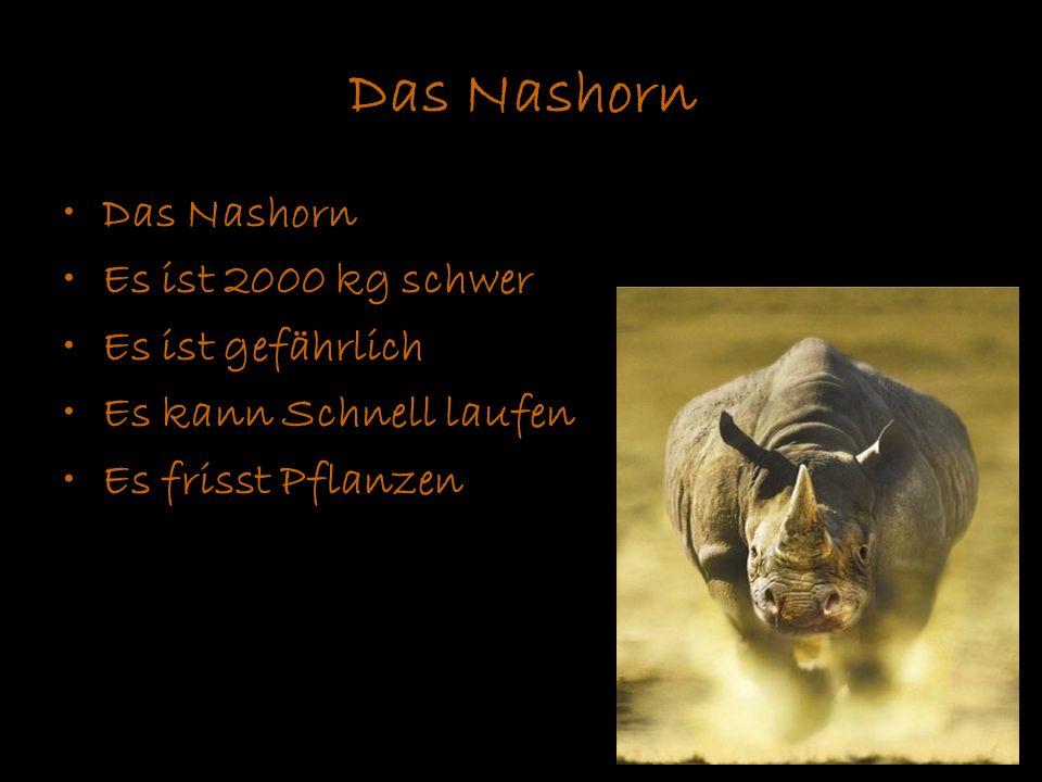 Das Nashorn Das Nashorn Es ist 2000 kg schwer Es ist gefährlich