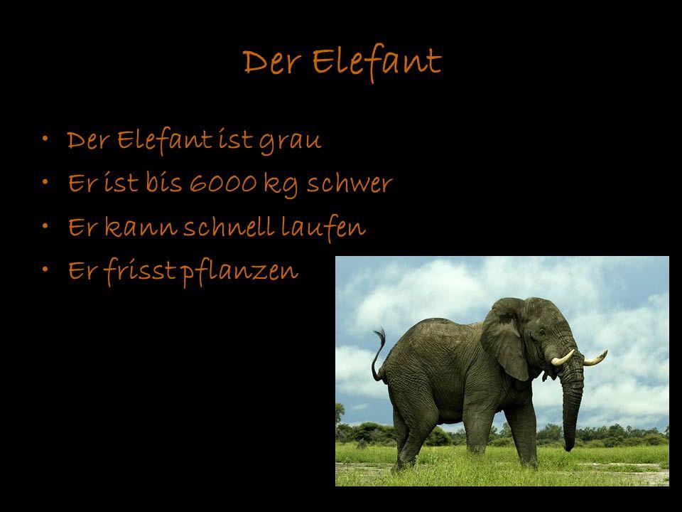 Der Elefant Der Elefant ist grau Er ist bis 6000 kg schwer