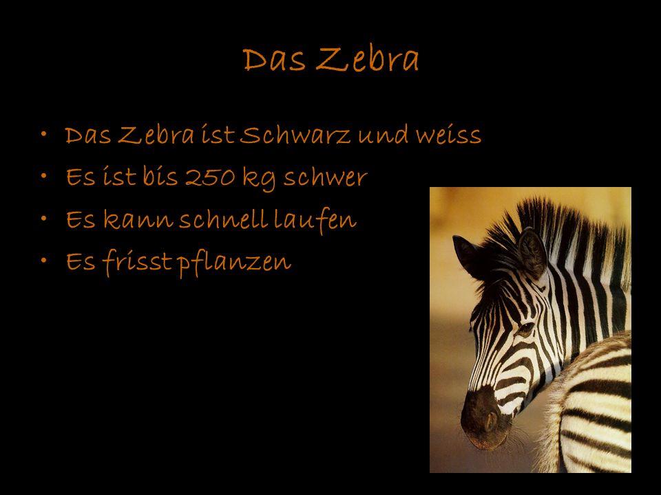 Das Zebra Das Zebra ist Schwarz und weiss Es ist bis 250 kg schwer