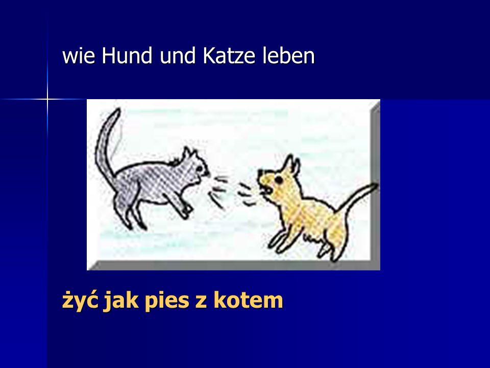 wie Hund und Katze leben