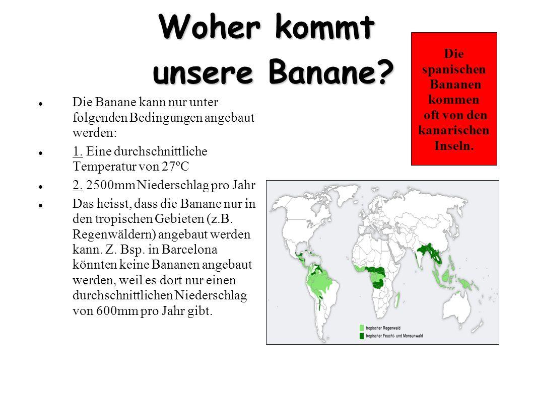 Woher kommt unsere Banane
