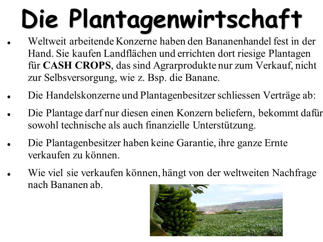 Die Plantagenwirtschaft