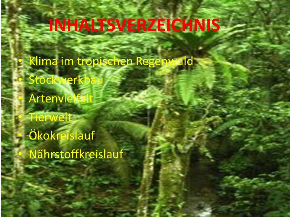 INHALTSVERZEICHNIS Klima im tropischen Regenwald Stockwerkbau