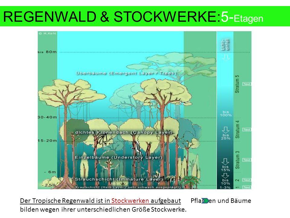REGENWALD & STOCKWERKE:5-Etagen