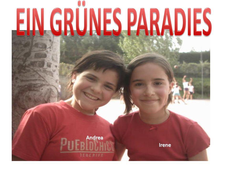 Andrea Irene