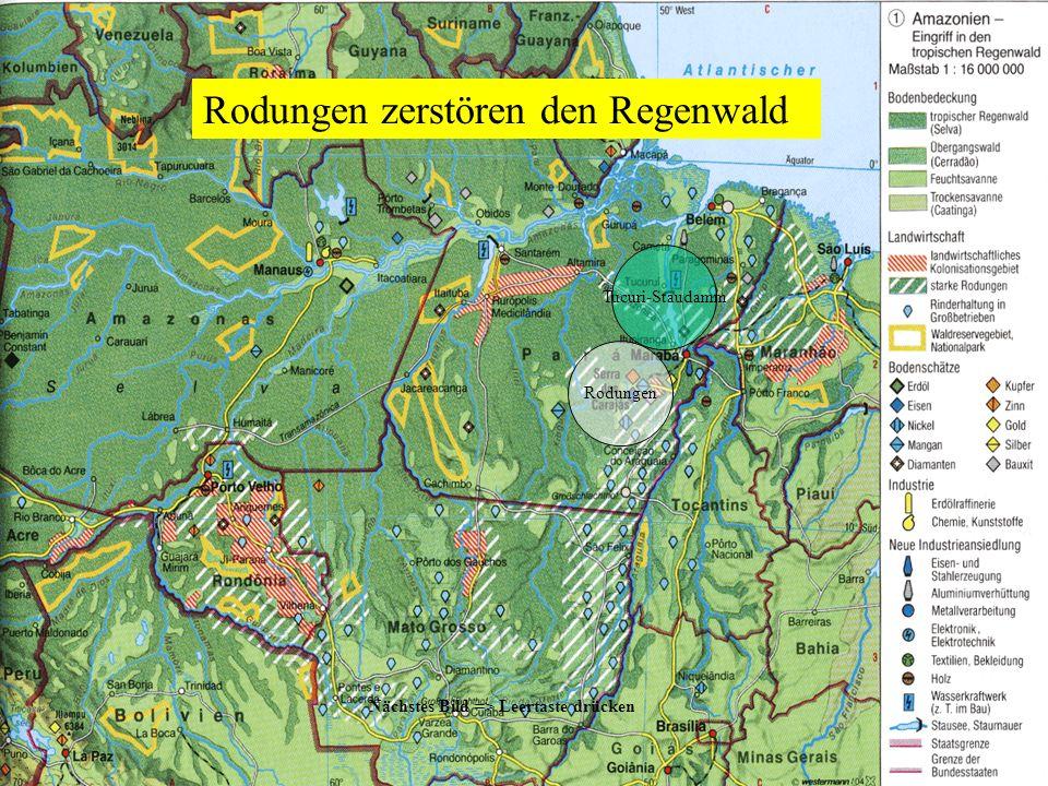 Rodungen zerstören den Regenwald