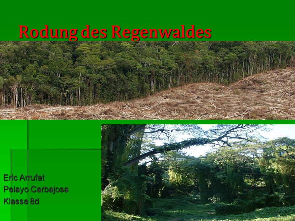 Rodung des Regenwaldes