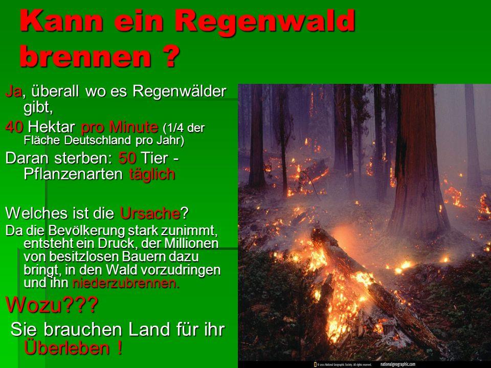 Kann ein Regenwald brennen