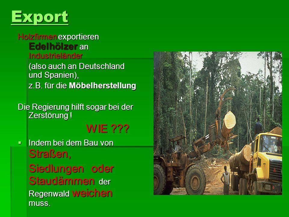 Export Siedlungen oder Staudämmen der Regenwald weichen muss.