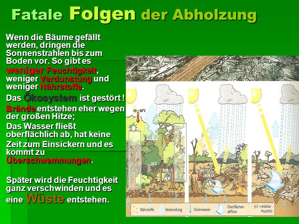 Fatale Folgen der Abholzung