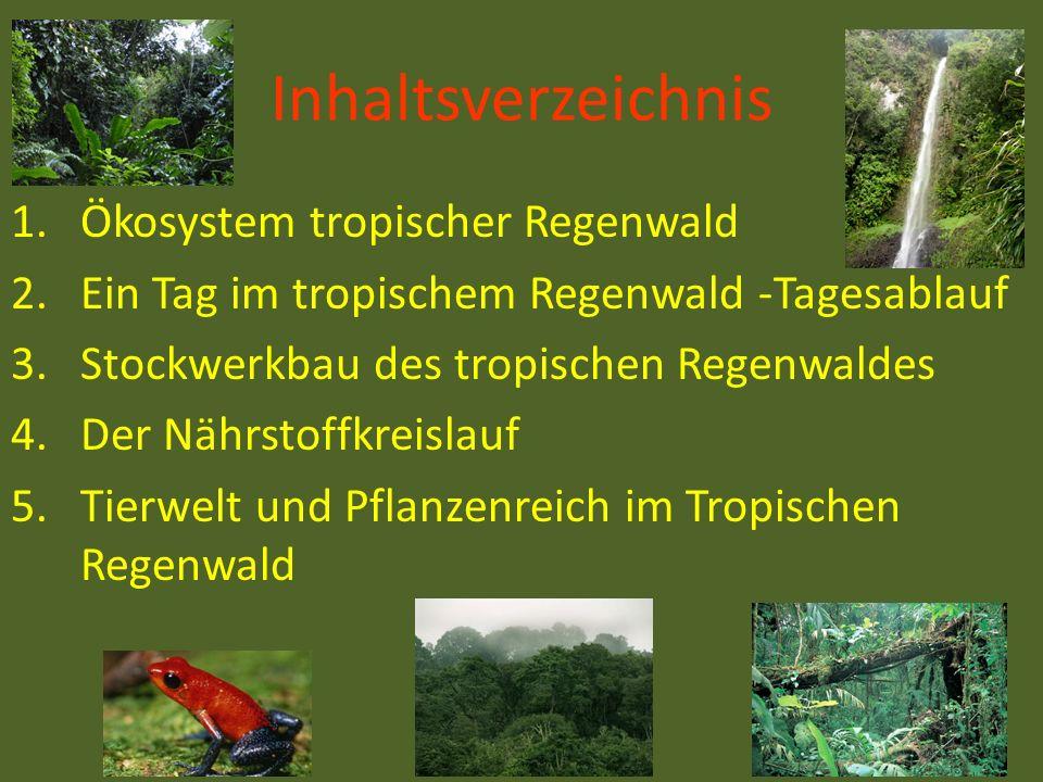 Inhaltsverzeichnis Ökosystem tropischer Regenwald