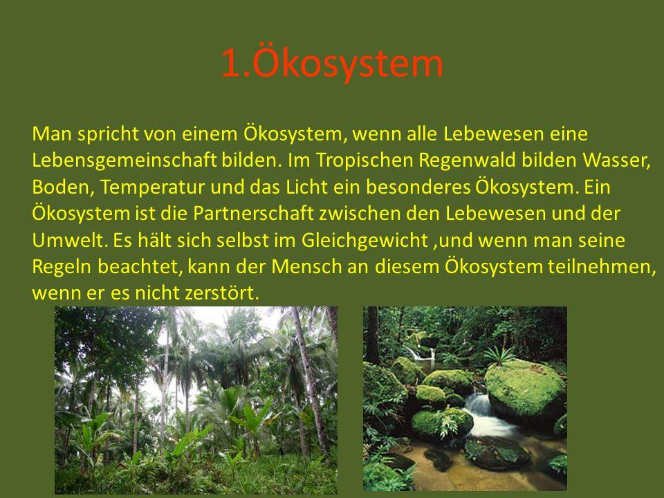 1.Ökosystem