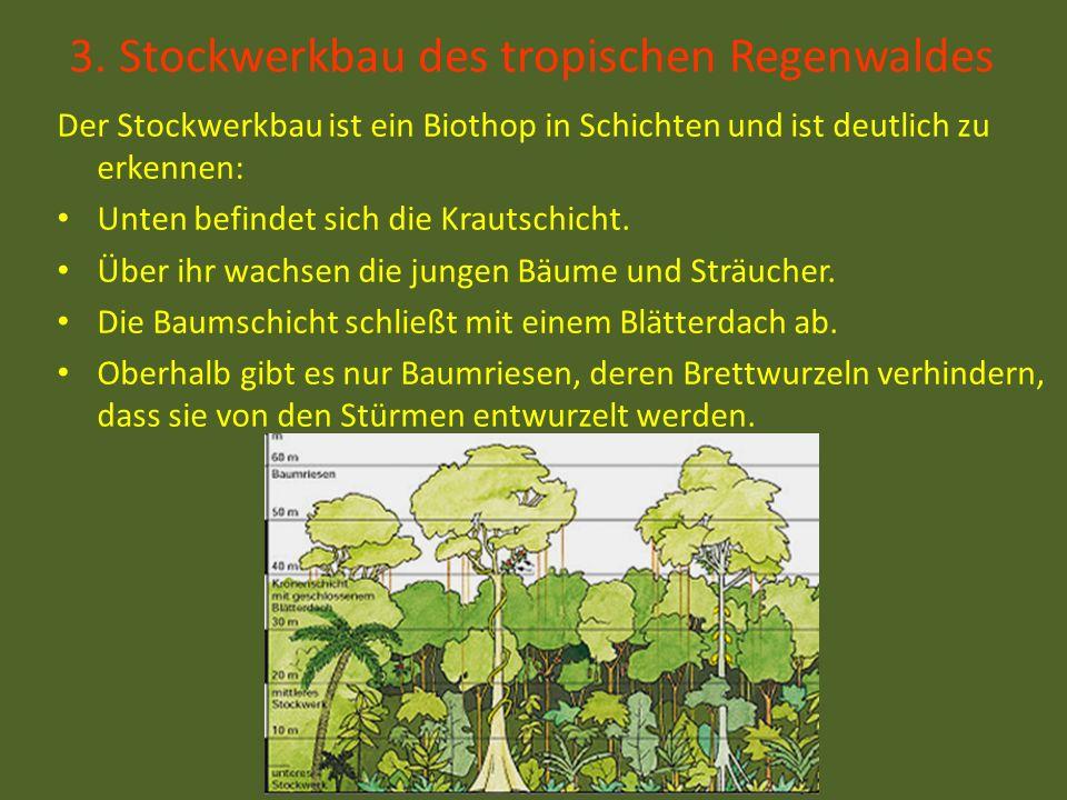 3. Stockwerkbau des tropischen Regenwaldes