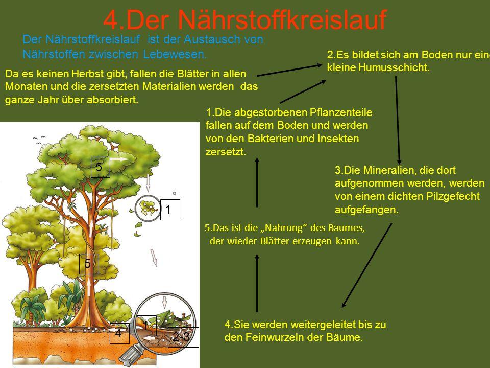 """5.Das ist die """"Nahrung des Baumes, der wieder Blätter erzeugen kann."""
