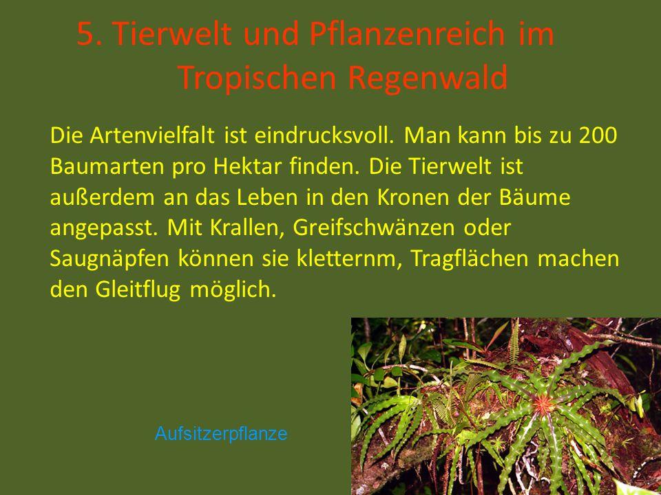 5. Tierwelt und Pflanzenreich im Tropischen Regenwald
