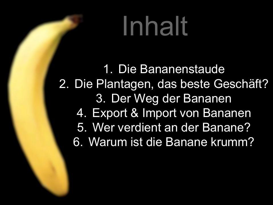 Inhalt Die Bananenstaude Die Plantagen, das beste Geschäft