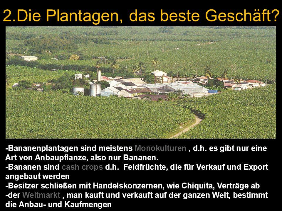 2.Die Plantagen, das beste Geschäft