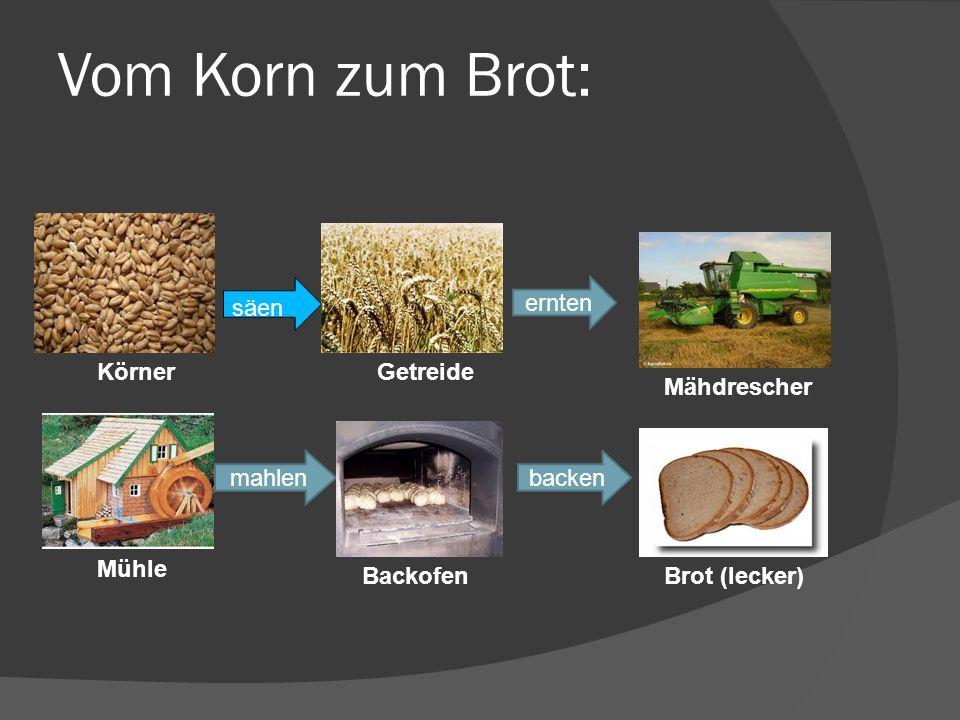 Vom Korn zum Brot: Brot 6 säen ernten säen Körner Getreide Mähdrescher