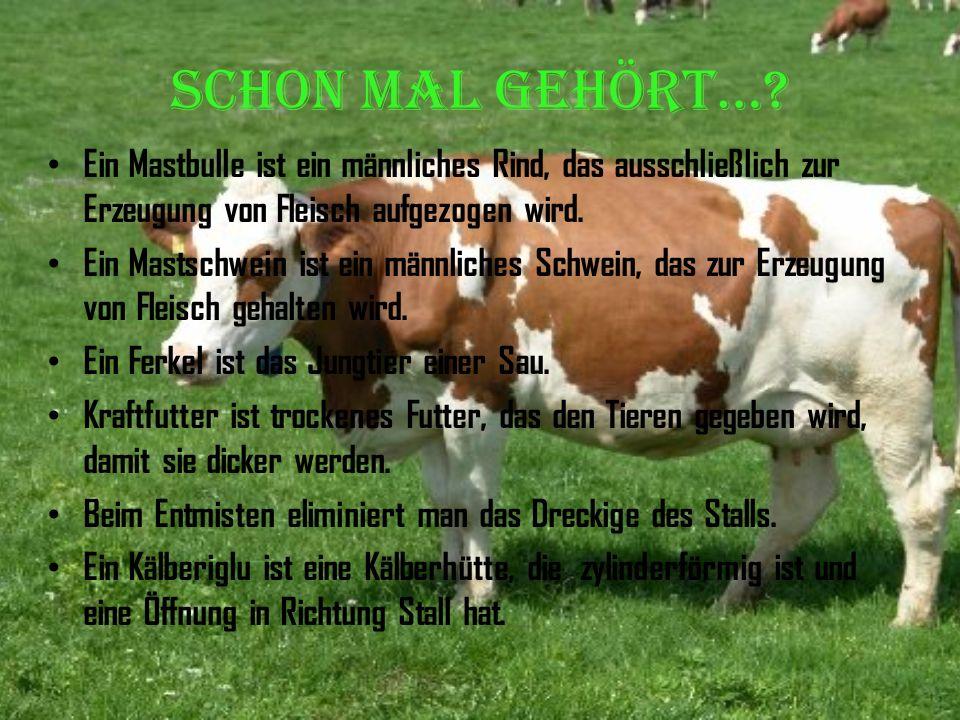 Schon mal gehört… Ein Mastbulle ist ein männliches Rind, das ausschließlich zur Erzeugung von Fleisch aufgezogen wird.