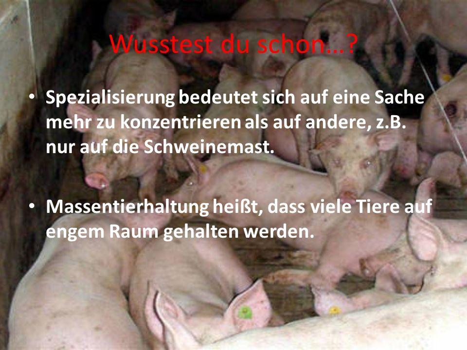 Wusstest du schon… Spezialisierung bedeutet sich auf eine Sache mehr zu konzentrieren als auf andere, z.B. nur auf die Schweinemast.