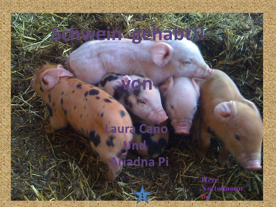 Schwein gehabt!! von Laura Cano Und Ariadna Pi Herr Nottelmann 6d 1