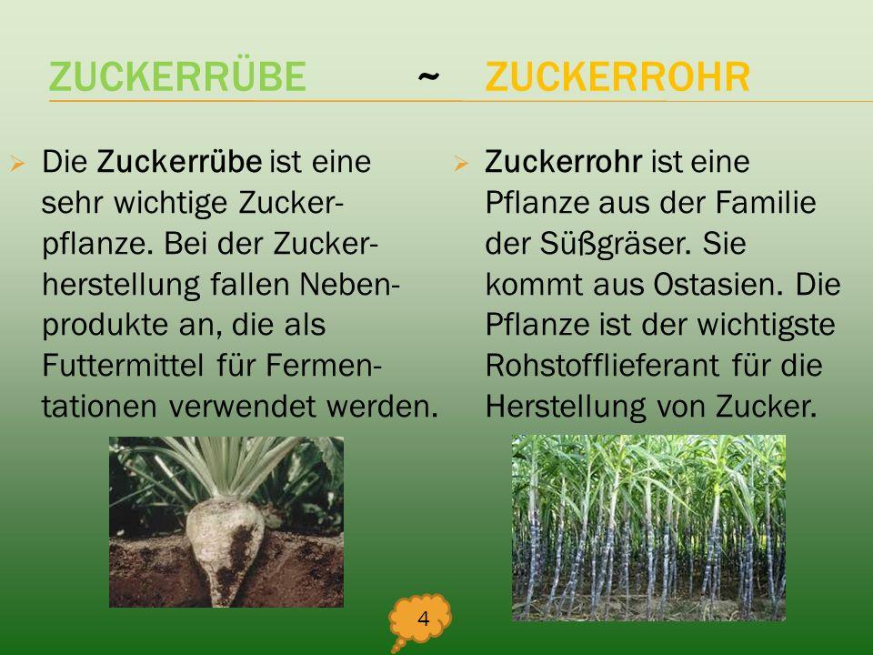 ZUCKERRÜBE ~ ZUCKERROHR
