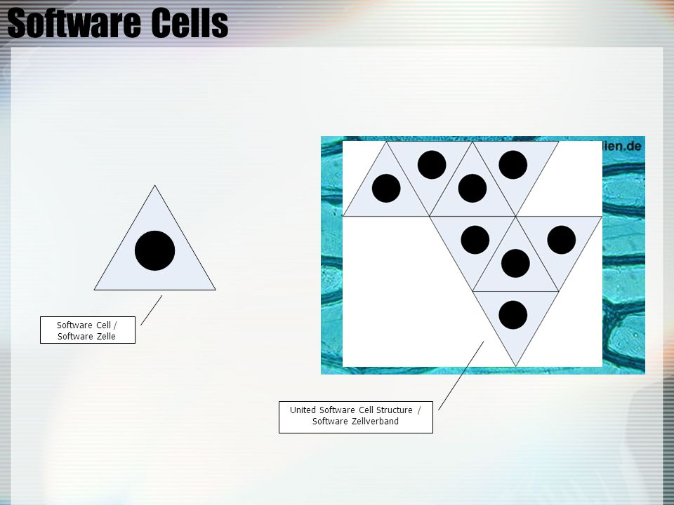 United Software Cell Structure /