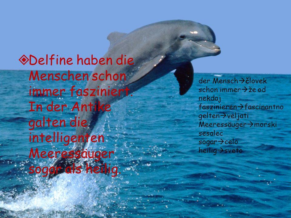 Delfine haben die Menschen schon immer fasziniert