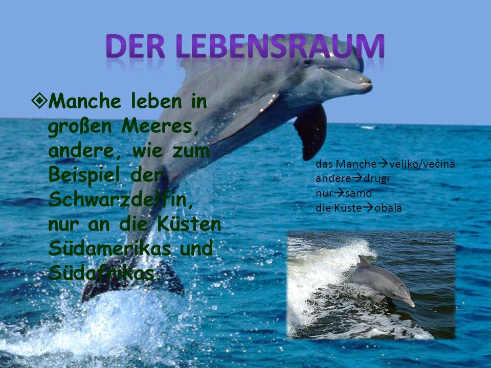 Der LebensraumManche leben in großen Meeres, andere, wie zum Beispiel der Schwarzdelfin, nur an die Küsten Südamerikas und Südafrikas.