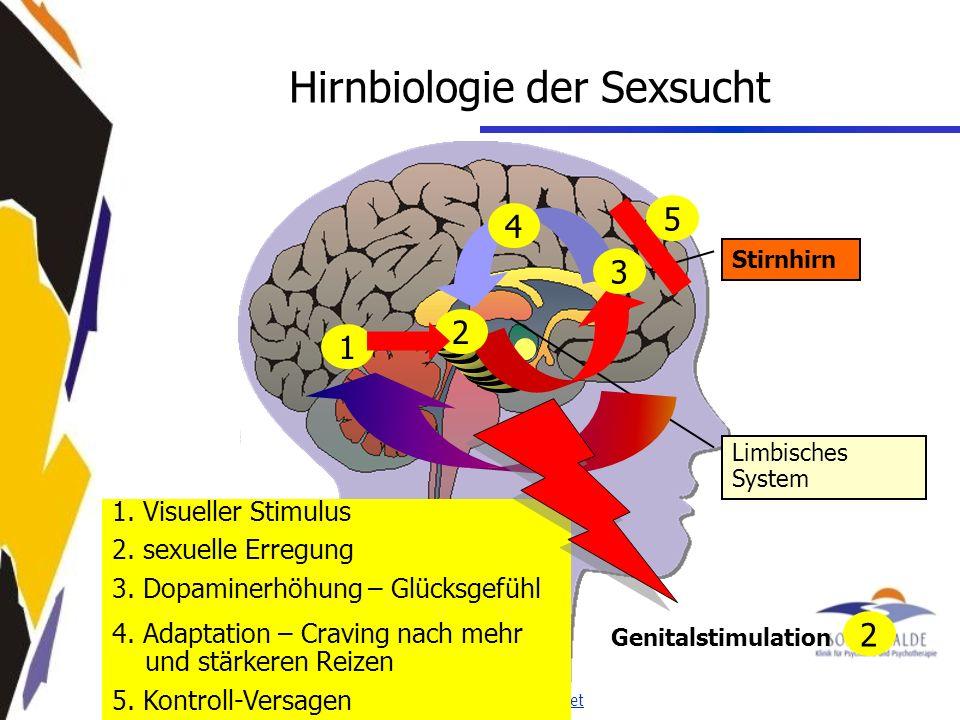 Hirnbiologie der Sexsucht