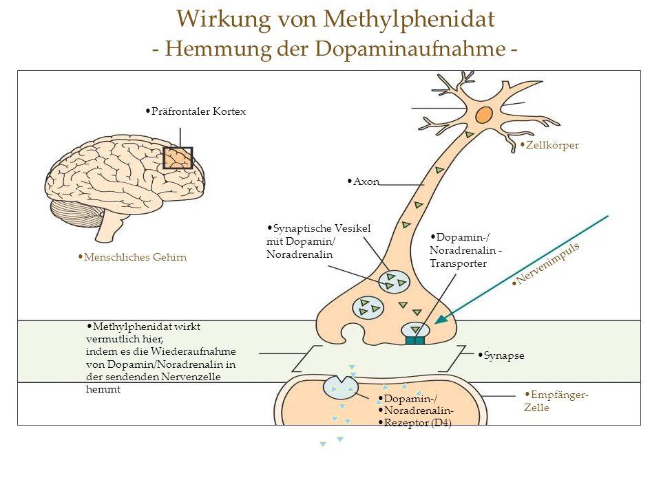 Wirkung von Methylphenidat