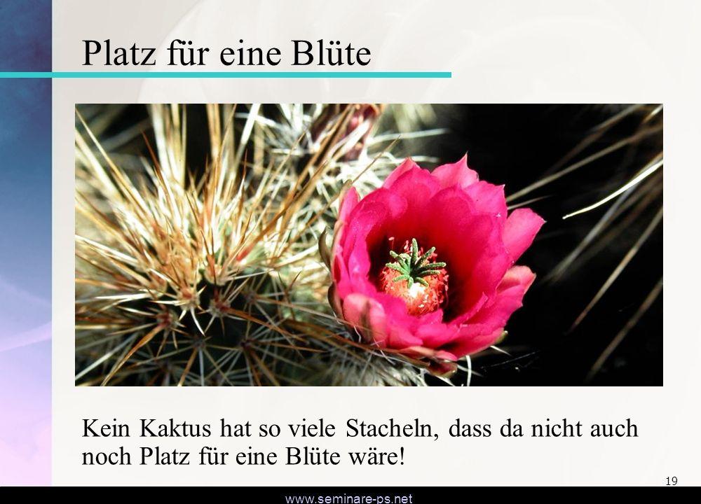 Platz für eine Blüte Kein Kaktus hat so viele Stacheln, dass da nicht auch noch Platz für eine Blüte wäre!