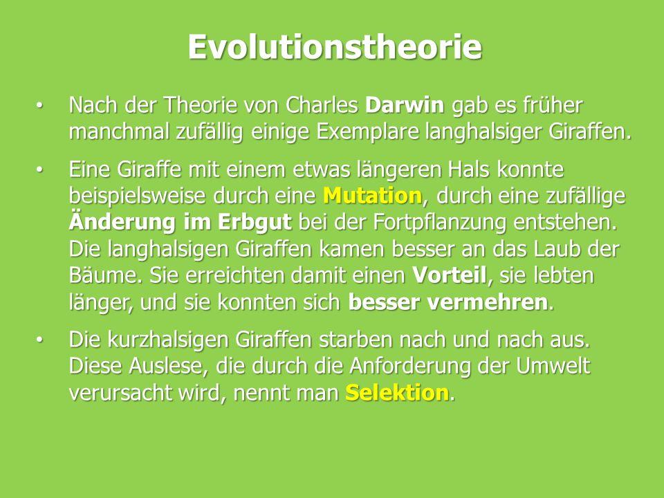 Evolutionstheorie Nach der Theorie von Charles Darwin gab es früher manchmal zufällig einige Exemplare langhalsiger Giraffen.