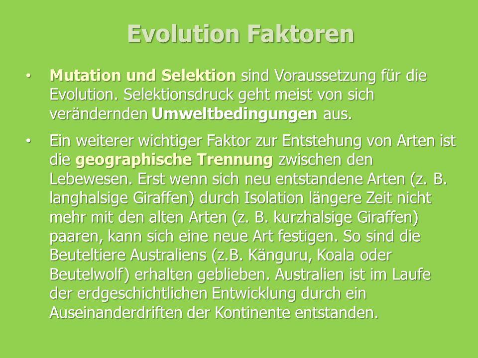Evolution Faktoren