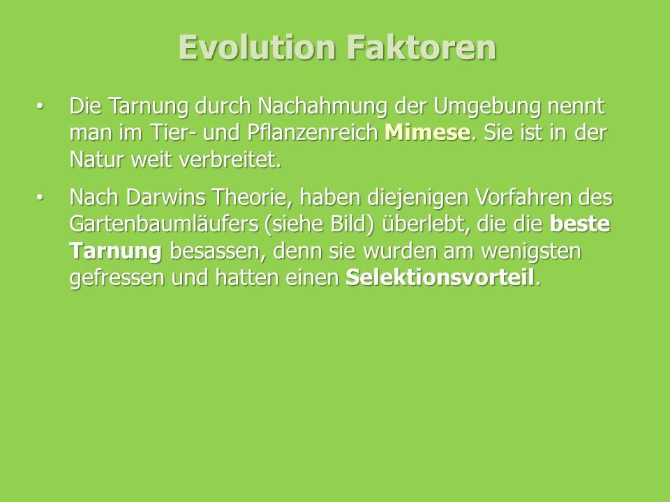 Evolution Faktoren Die Tarnung durch Nachahmung der Umgebung nennt man im Tier- und Pflanzenreich Mimese. Sie ist in der Natur weit verbreitet.