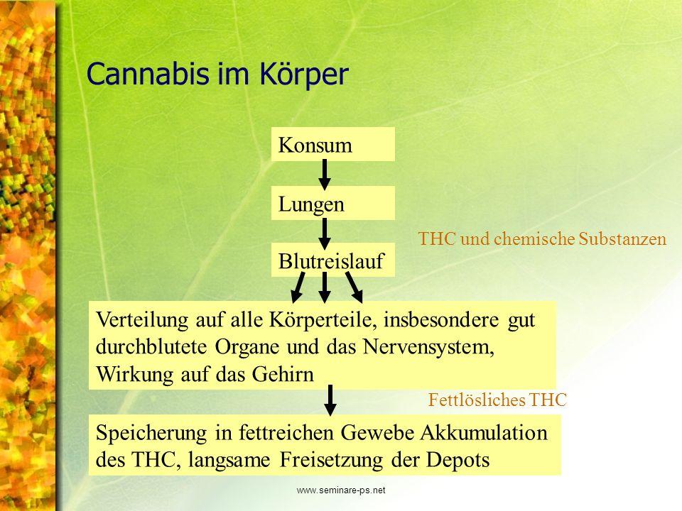 Cannabis im Körper Konsum Lungen Blutreislauf