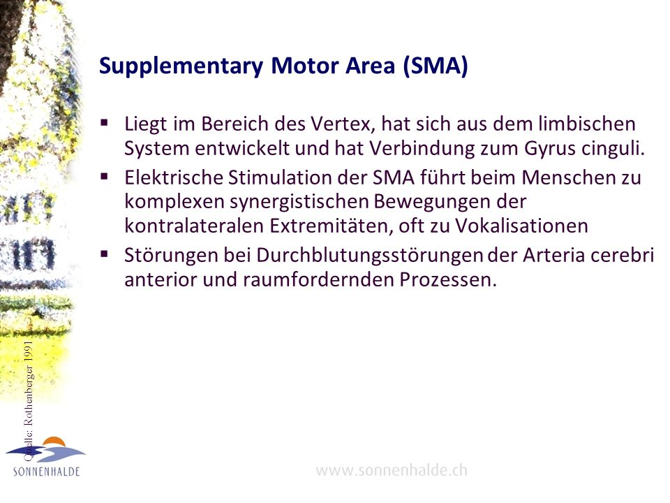 Supplementary Motor Area (SMA)