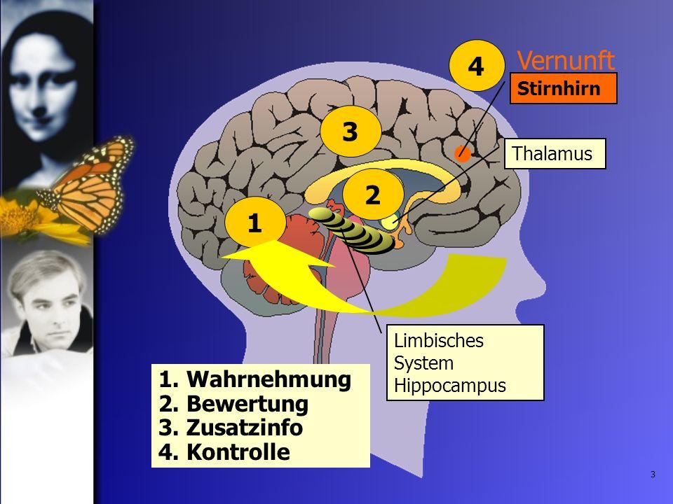 Vernunft Stirnhirn. 4. 3. Thalamus. Limbisches System Hippocampus.