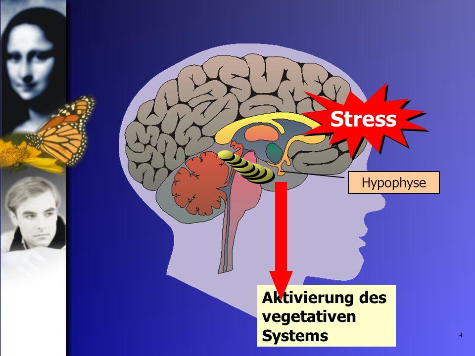 Stress Hypophyse Aktivierung des vegetativen Systems
