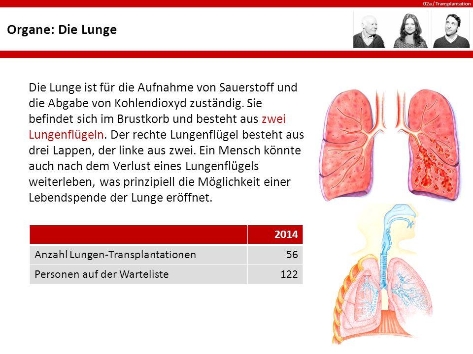 Organe: Die Lunge