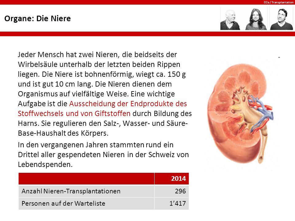 Organe: Die Niere