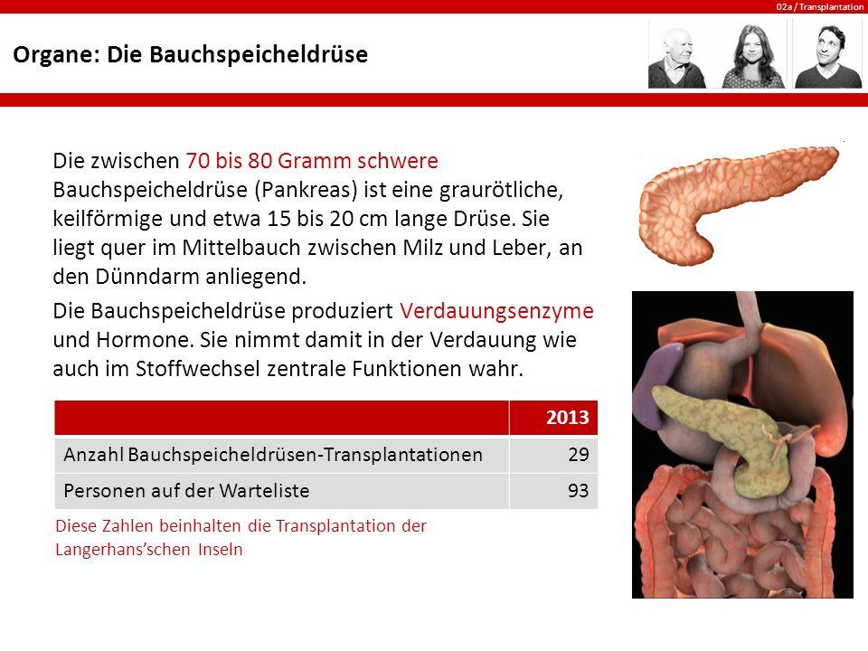 Organe: Die Bauchspeicheldrüse